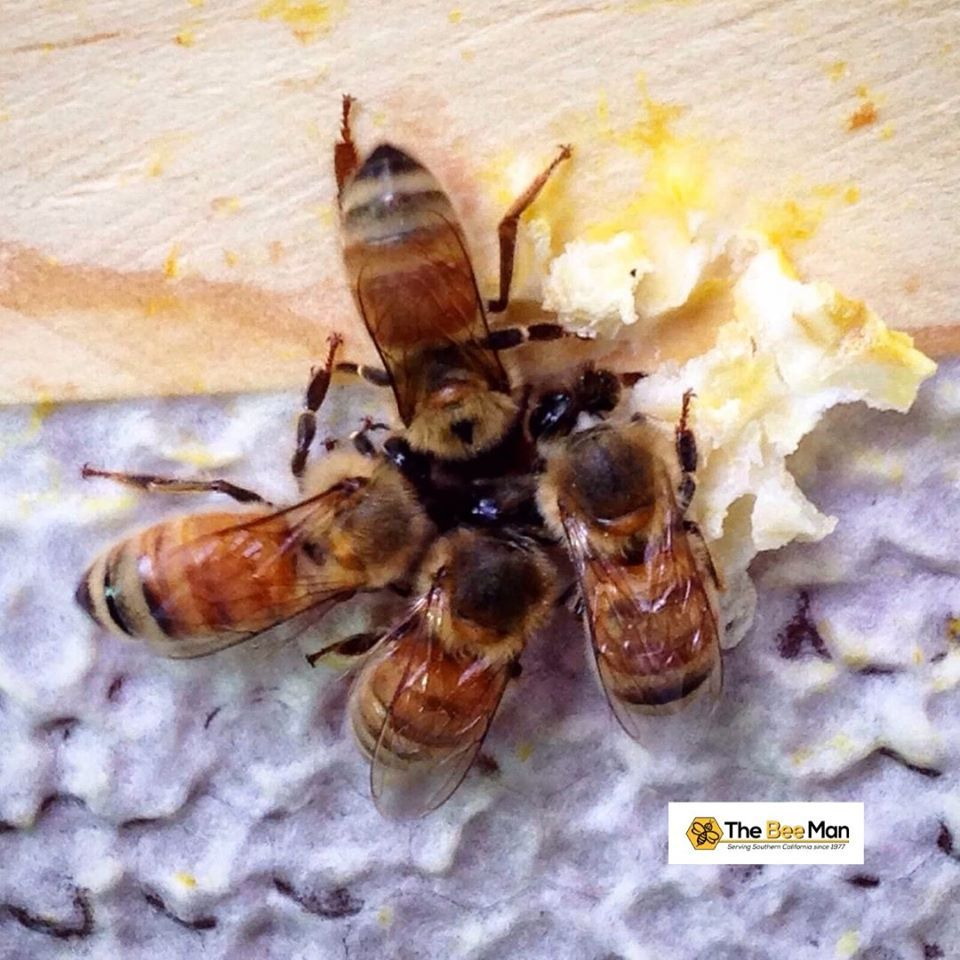 40++ What makes the buzzing sound of a bee trends