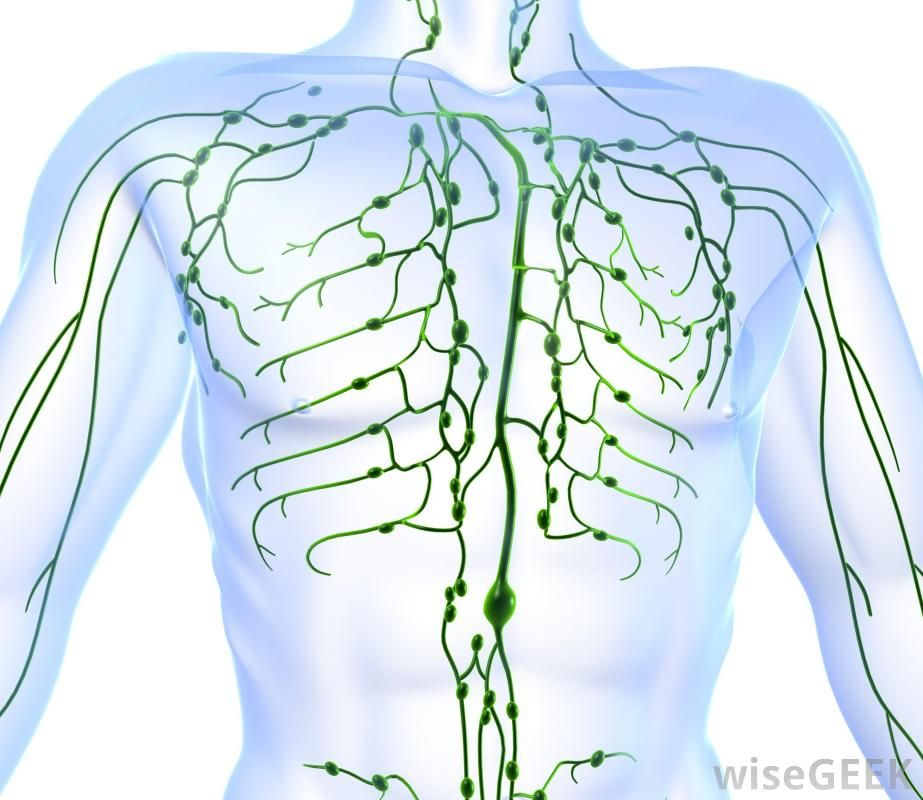 Great quiz on Lymphatic System! | Lymphatic System | Pinterest ...