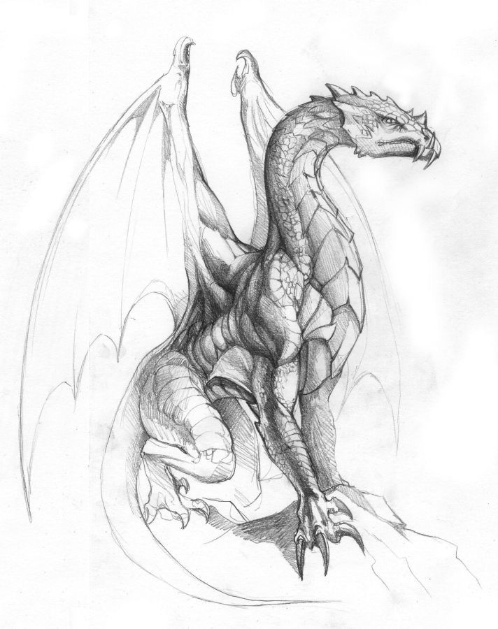 Example of a dragon drawn -   21 dragon tattoo sketch