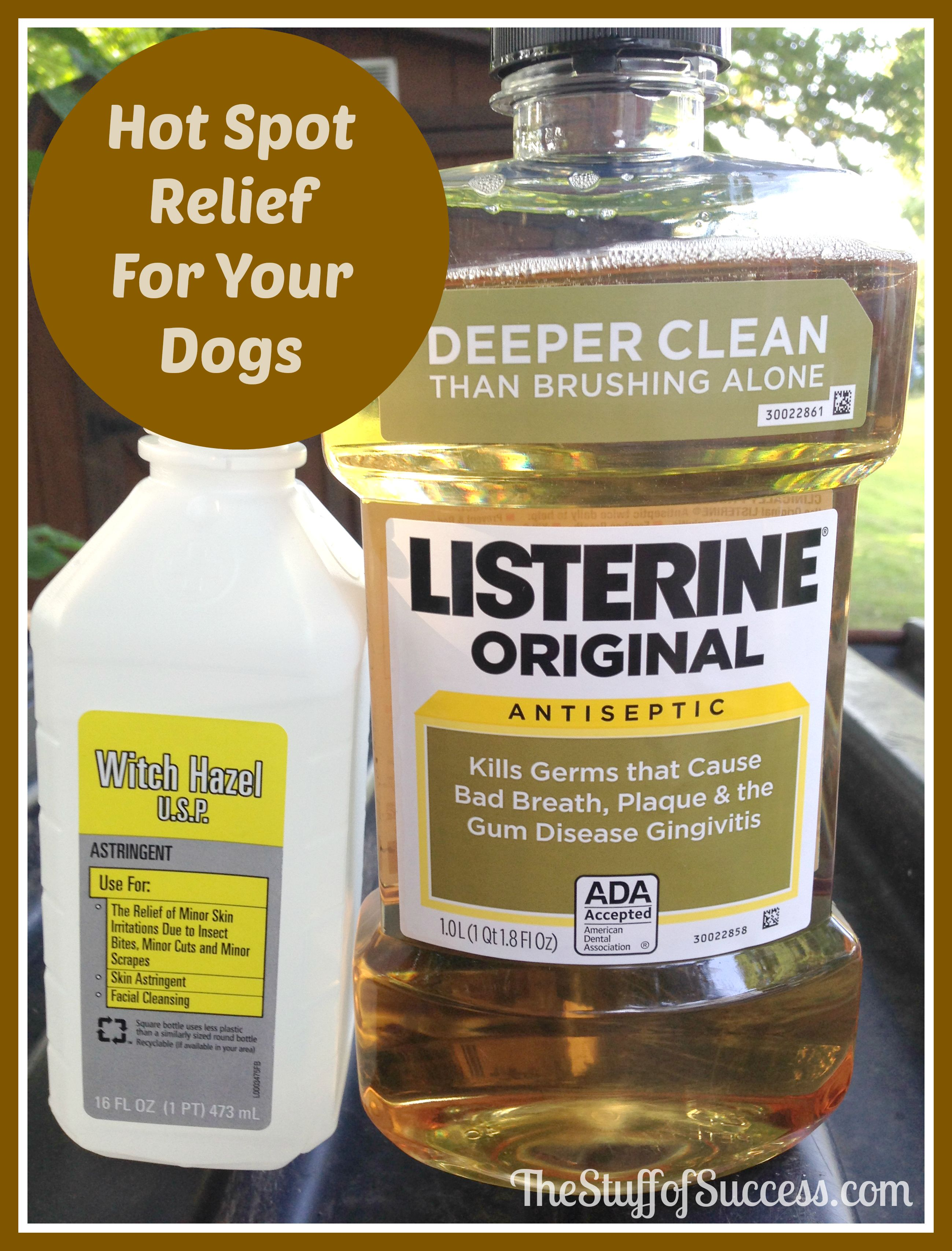 Hot Spot Relief For Your Dogs Dog hot spots treatment