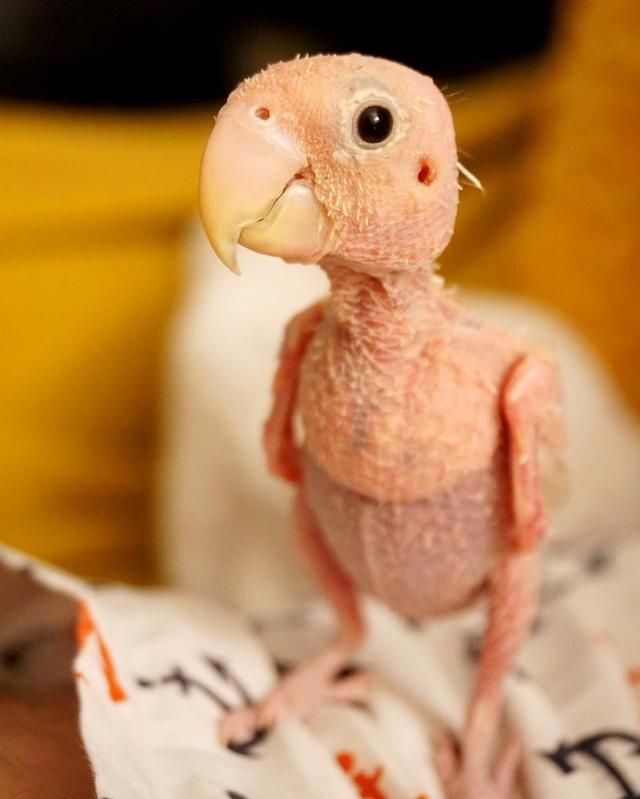 2d46306a9aa66b Cute naked bird dressed in tiny knitted jumpers becomes famous Instagram  star with 120