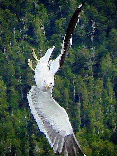 """""""Torsión"""". Lago Nahuel Huapi, Bariloche, Argentina. Foto tomada por mí :)"""