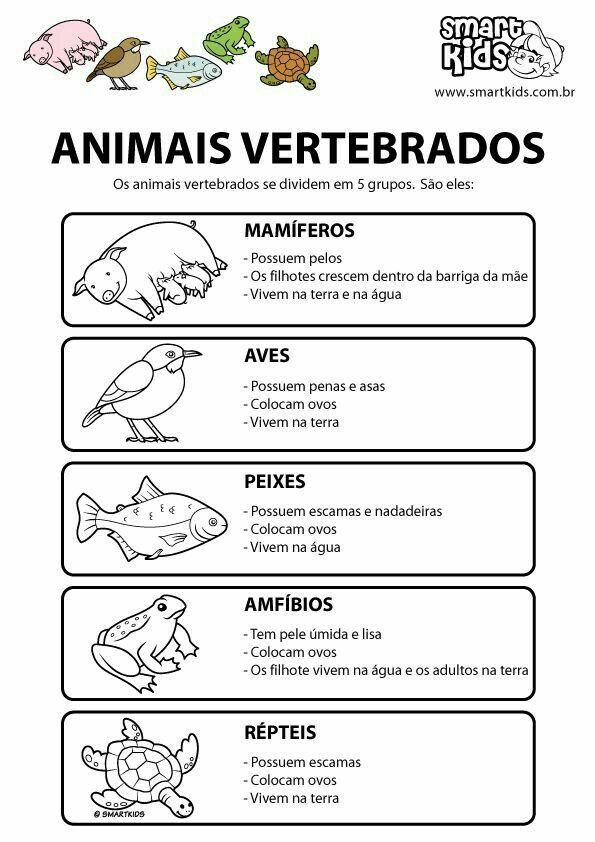 Pin De Magdalena Juambeltz Em Animales Com Imagens Atividades