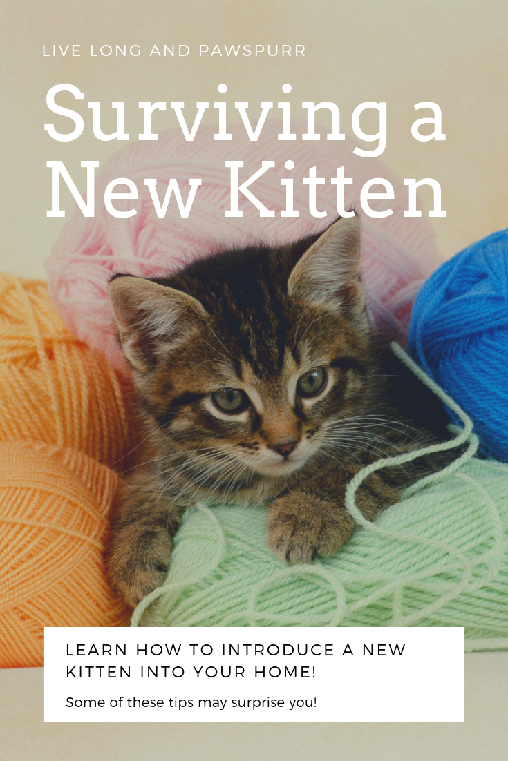 7 Helpful Tips For Introducing A New Kitten To Your Home Live Long And Pawspurr Cat Training Cat Advice Kitten Hacks