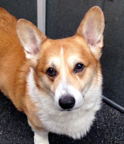 King A1073471 Dog Help Shelter Dogs Dog Adoption