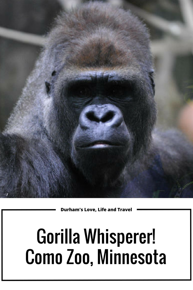 Gorilla Whisperer Minnesota travel