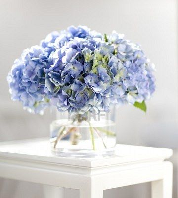 Gorgeous blue hydrangeas. My favorite flower. Makes me so happy ...