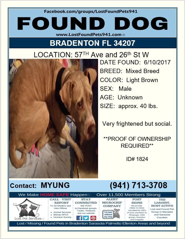Do You Know Me Founddog Lost Dog Pitbull Mix Mixedbreed Bradenton Fl Near Scf Lostfoundpets941 Losing A Pet Service Animal Mixed Breed