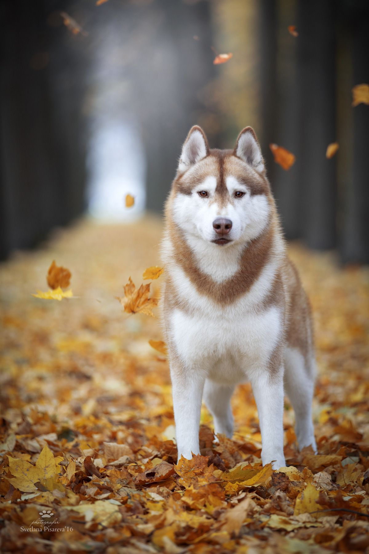 Autumn Portrait By Svetlana Pisareva Fall Fall Leaves Leaf
