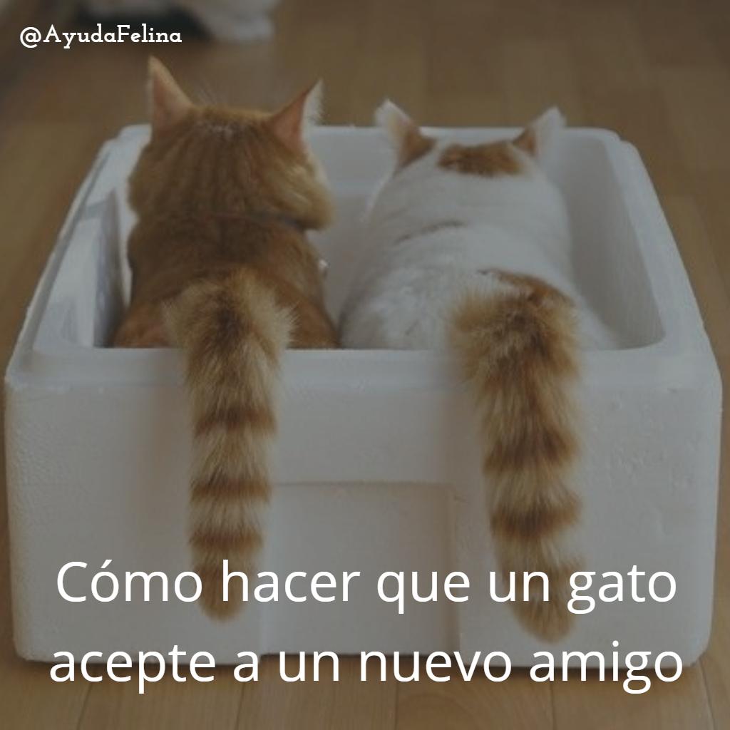 Visita Mi Blog Si Quieres Saber Cómo Acelerar La Convivencia Entre Dos Gatos Cats Animals