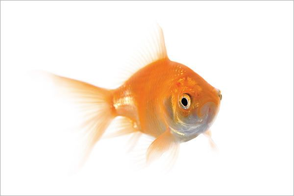 Pictures of pets small pet fish pets pinterest for Best fish to have as pets