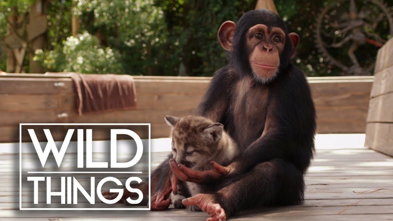 Animal Odd Couples Youtube animal odd couples [full documentary] | wild things