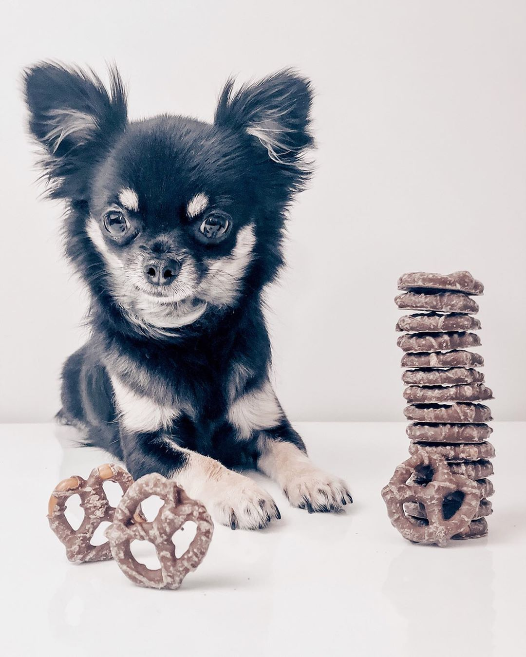 Chihuahua Kai On Instagram I Take It Back Monday S