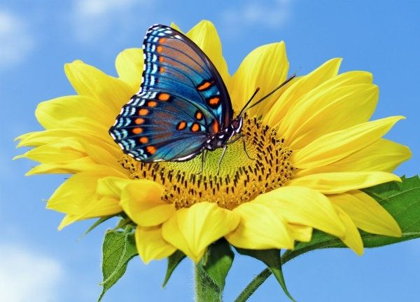 7f33ee14a Flower and butterfly images free stock photos download (11,405 ...