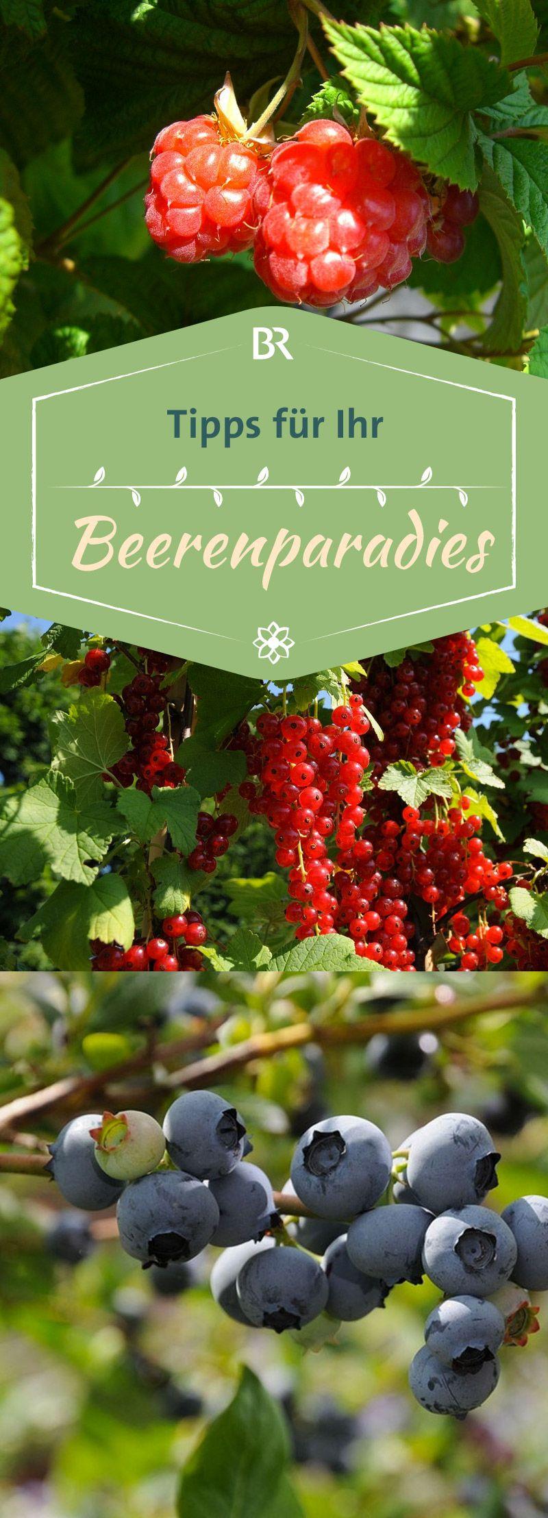 Querbeet-Garten: Querbeet-Garten: Beeriger Naschstreifen | BR.de