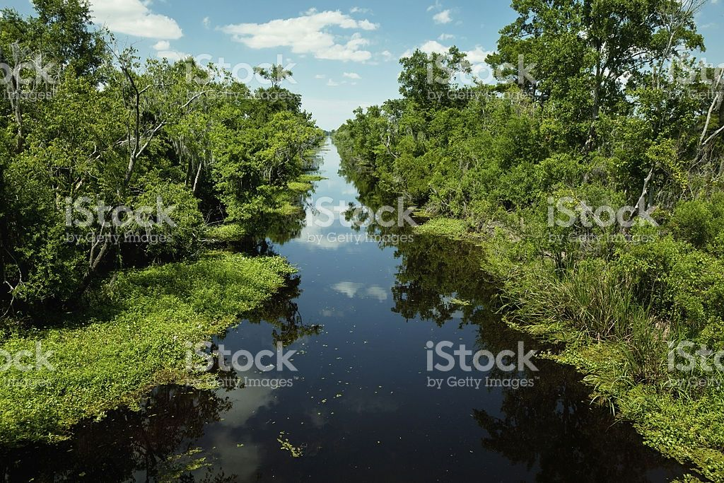 water canal trough dense green swamp forest in New orleans