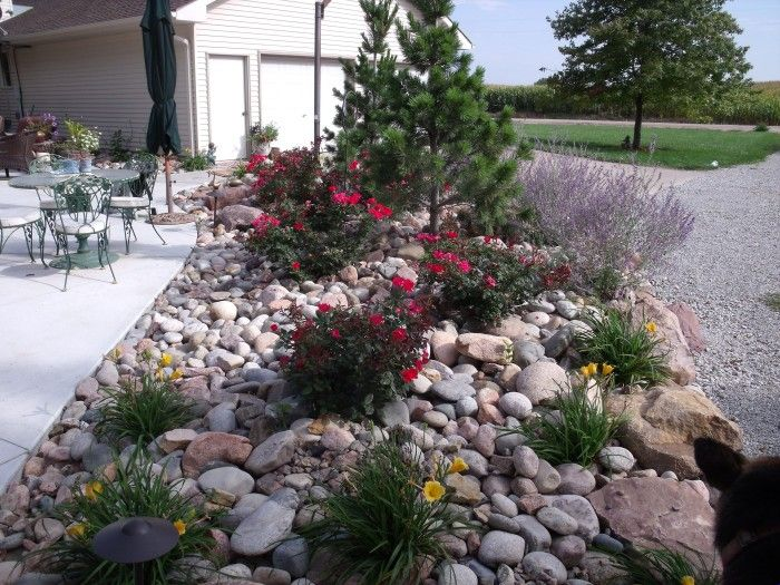 Contrasting River Rock Google Search Decorative Rock Landscaping Landscaping With Rocks Rock Garden Design