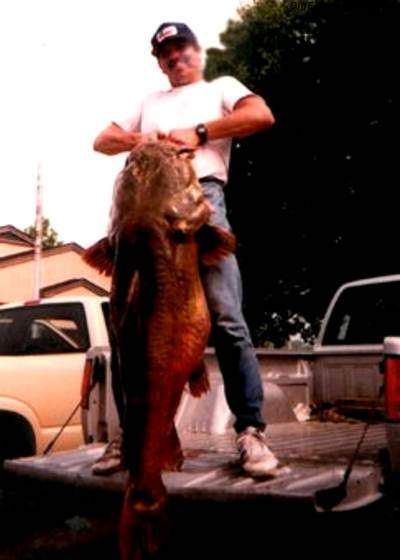 World record flathead catfish weighing 123 pounds from elk city world record flathead catfish weighing 123 pounds from elk city reservoir sciox Image collections