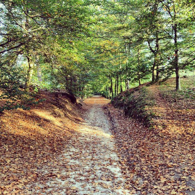 Sallandse Heuvelrug nabij Hellendoorn