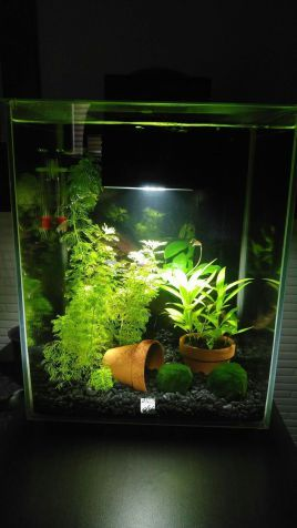 Amazing Aquascape Gallery Ideas That You Never Seen Before   DecOMG
