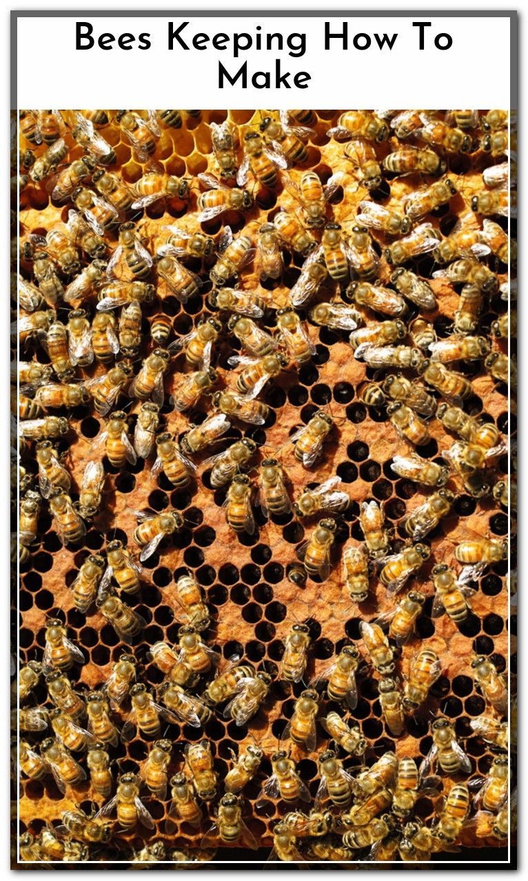 How To Get Rid Of Bees In Window Sill