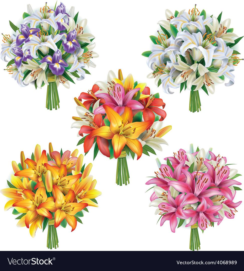 Set of lilies bouquets vector image on Цветы, Картинки