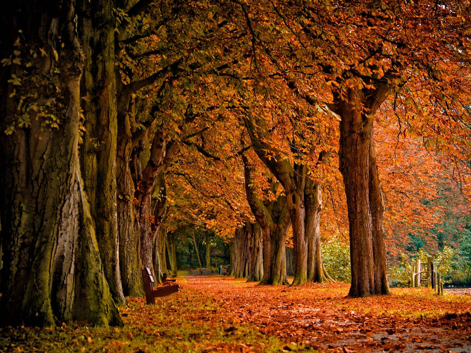Absolutely love this fall scenery. I'd love to sit on that park bench and read all day, with a cup of apple cider in hand.