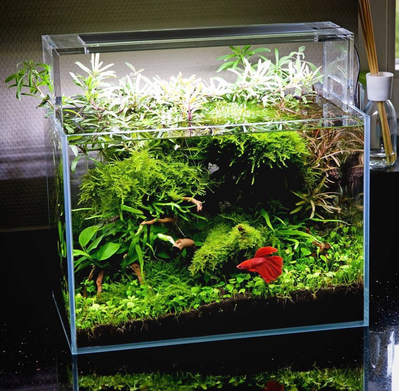 Beautiful planted tank for a betta with simple plants for Planted tank fish