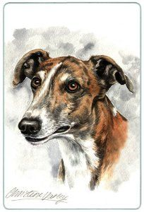 """Greyhound Cutting Board by Canine Designs. $29.95. Hygenic and easy to clean.. Heat resistant.. Size: 8"""" x 11"""". Made of tempered glass making it virtually unbreakable.. Scratch Resistant - imprinted on back. Our beautiful, dog breed cutting boards will enhance any kitchen. They make great gifts, are made of tempered glass and measure 9"""" x 12"""". They are heat resistant, scratch resistant, virtually unbreakable, easily cleaned and dishwasher safe."""