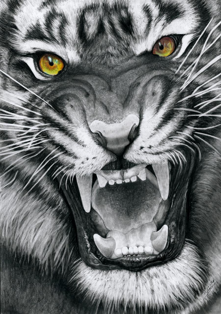 Snarling Tiger by Yankeestyle94 | Тигровый рисунок ...
