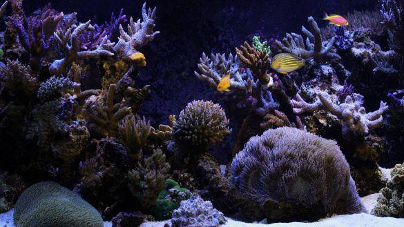 Aquarium Visit Us Www Deepblueaquariumusa Com Aquarium Backgrounds Image Of Fish Aquarium