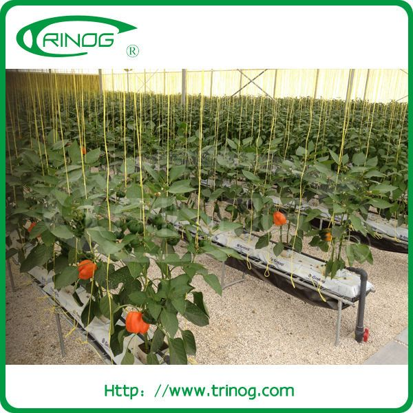 Source Commercial NFT hydroponic system for sale on m ...