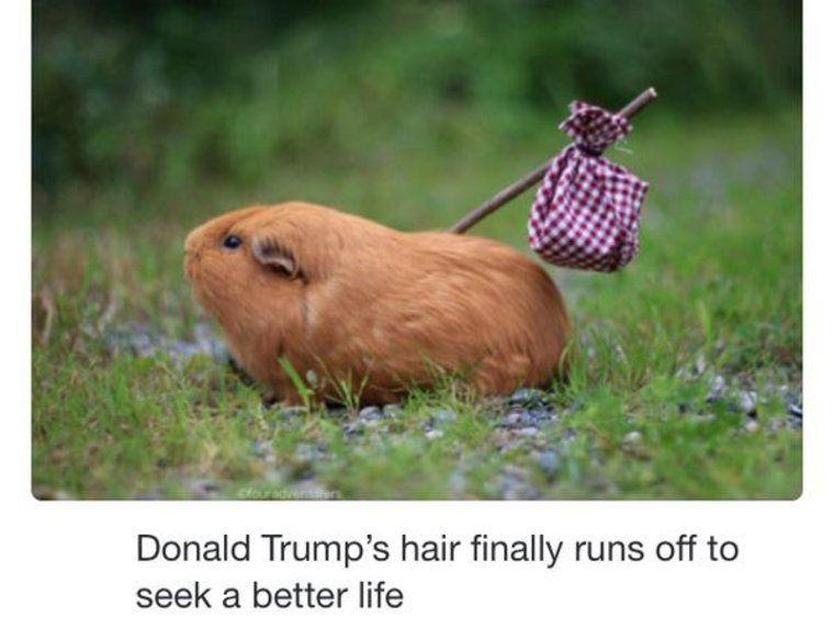 Omg Der Picdump Kann Kaum Glauben Was Sie Als Nachstes Macht Lustige Bilder Von Tieren Lustige Humor Bilder Funny Shit