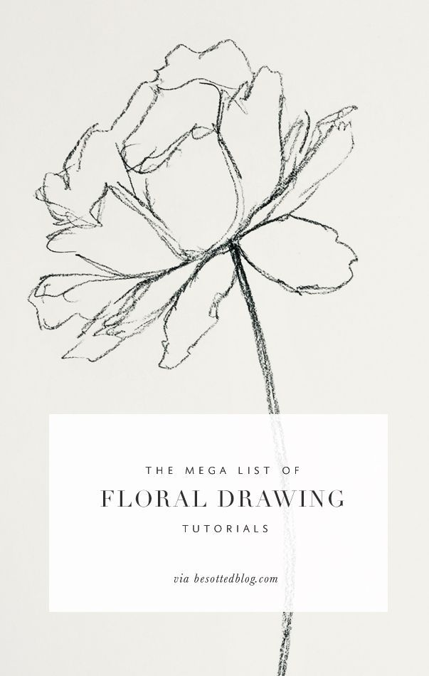 The Mega List Of Floral Drawing Tutorials Floral Drawing Plant
