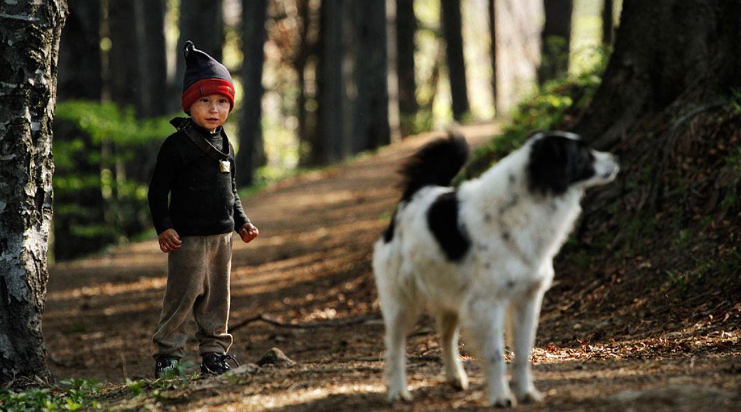 O menino e o cão
