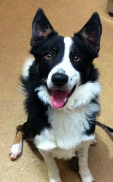 Collie Cross Devon At Bath Cats Dogs Home Dogs I Love Dogs