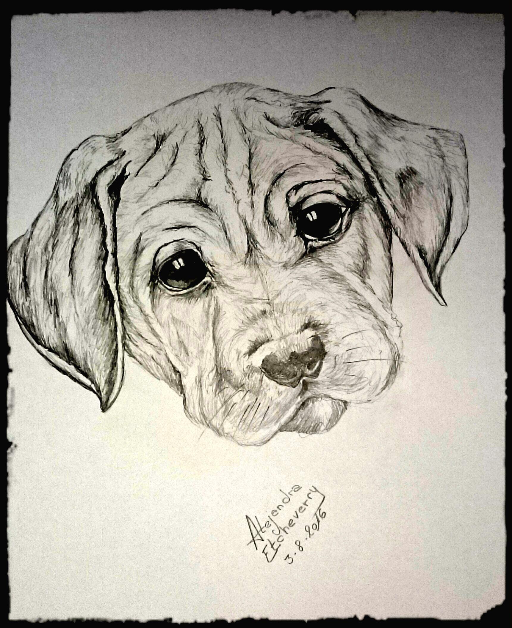 Título: Cachorro - Dibujo a Lapiz (47x32cm) - San Luis, Argentina ...