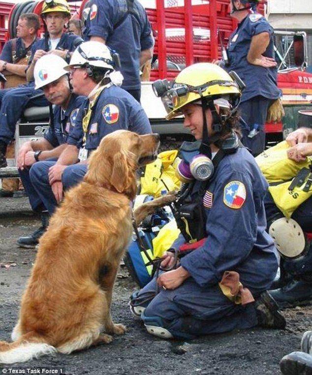 Meet Bretagne, the last surviving rescue dog from Ground Zero