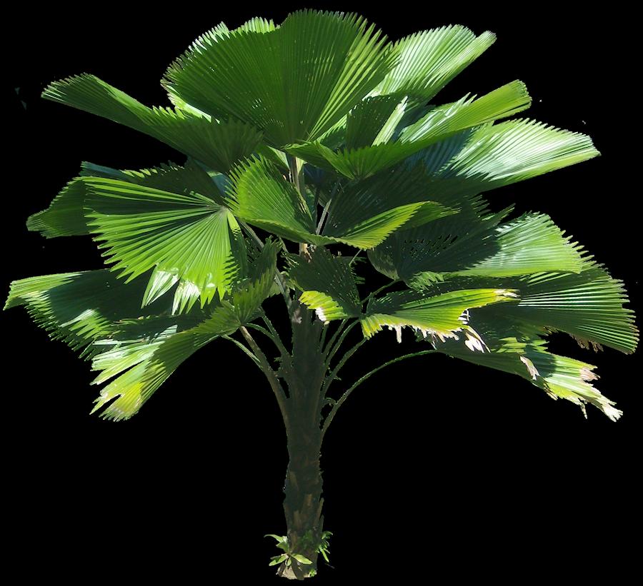 pin von is a auf plants layout aquarell und palmen. Black Bedroom Furniture Sets. Home Design Ideas