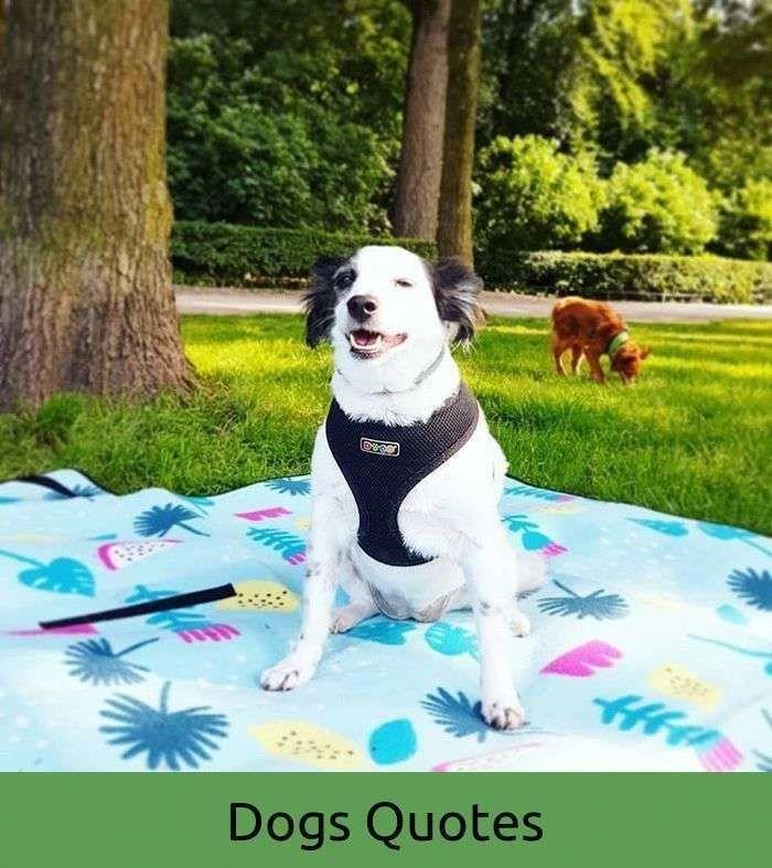 Masterdogtrainingtips Crate Training Dog Dog Training Dog
