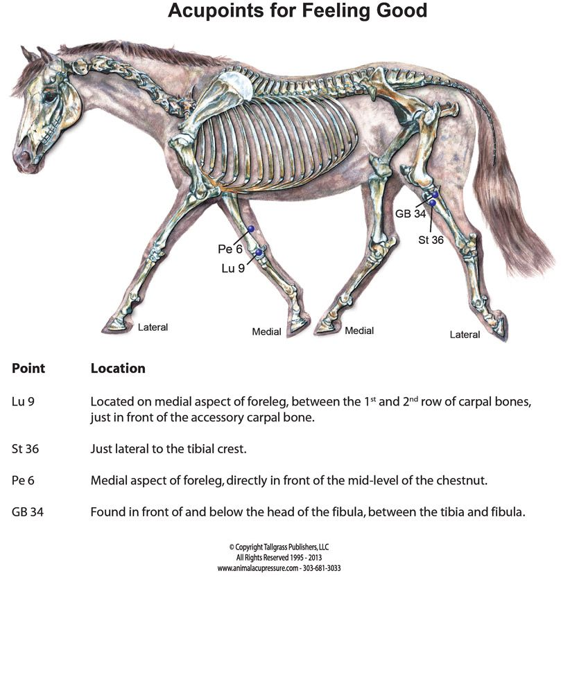 Acupressure For Your Performance Horse - Equine Wellness Magazine ...