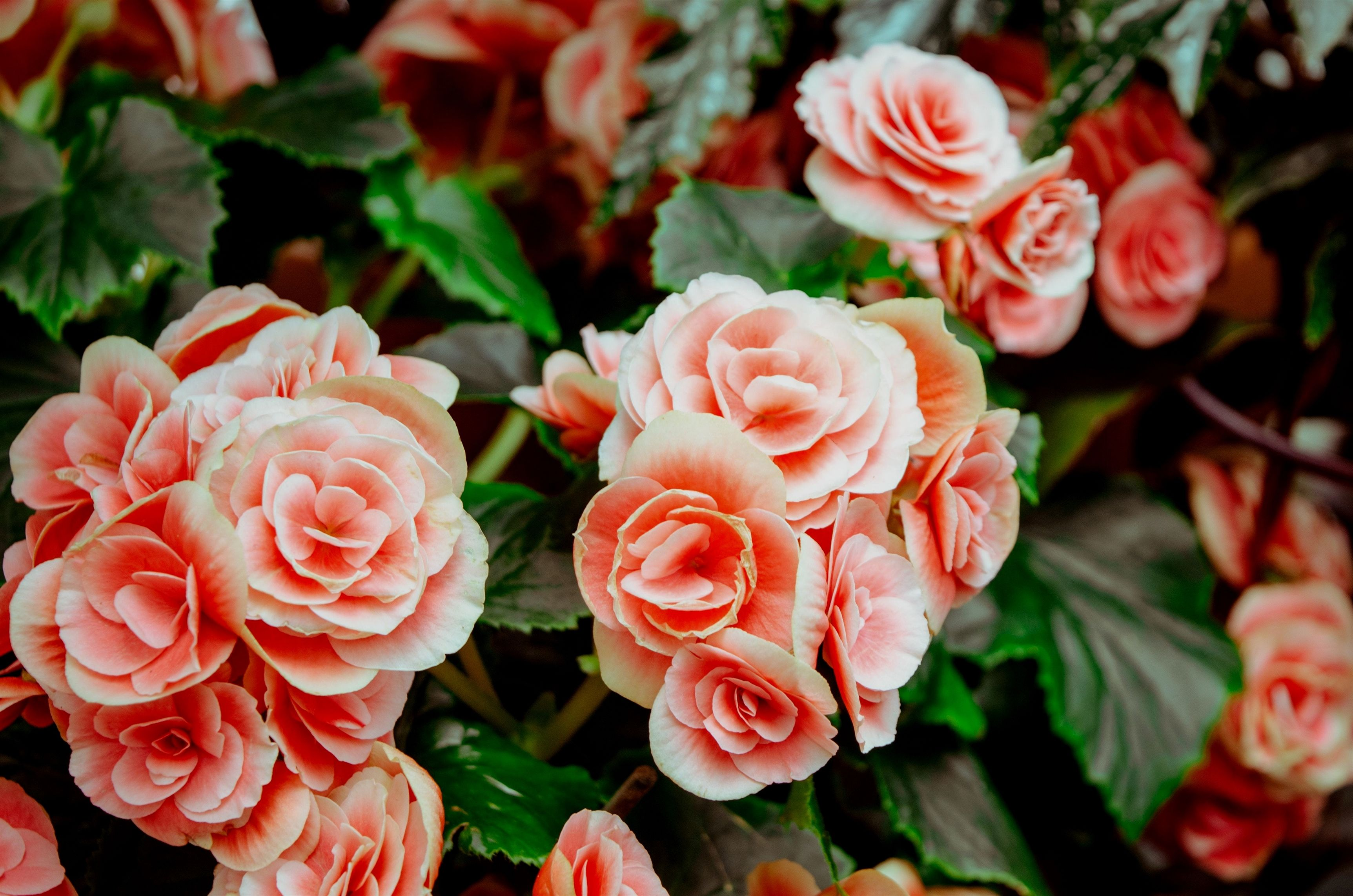 Follow This Information To Get You Garden Growing Garden