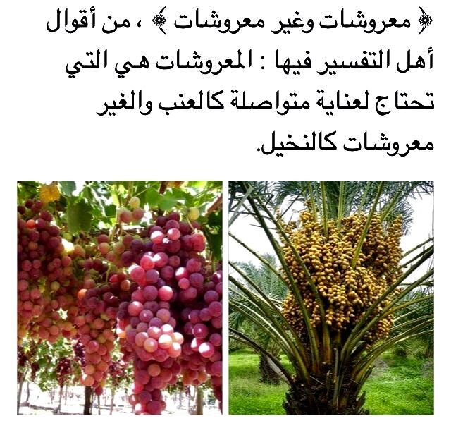 Desertrose معروشات وغير معروشات Plants Outdoor Structures Outdoor