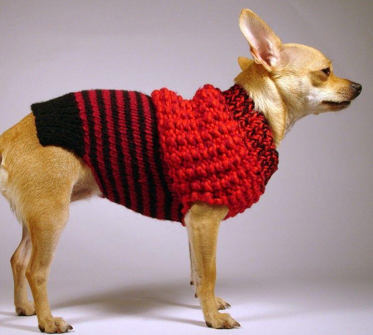 LA SIRENA  luxury brand la bamba dog sweater