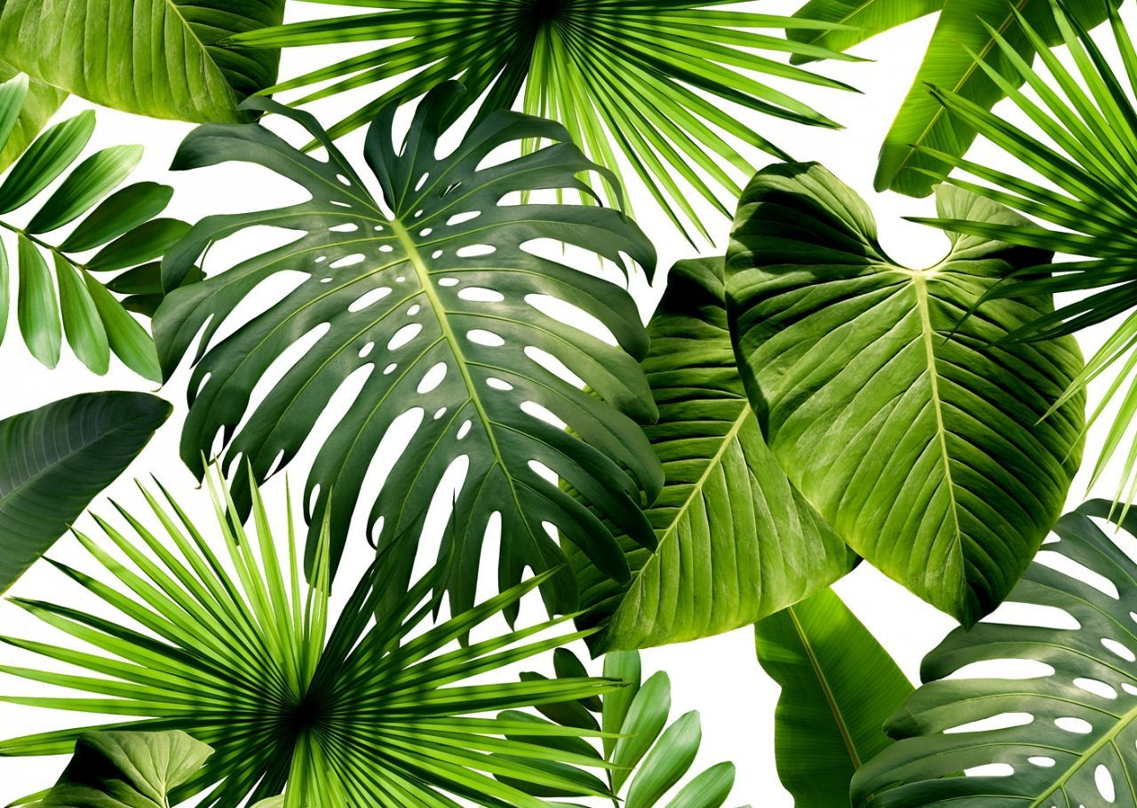 Decor & Trends Palm wallpaper, Tropical wallpaper, Color