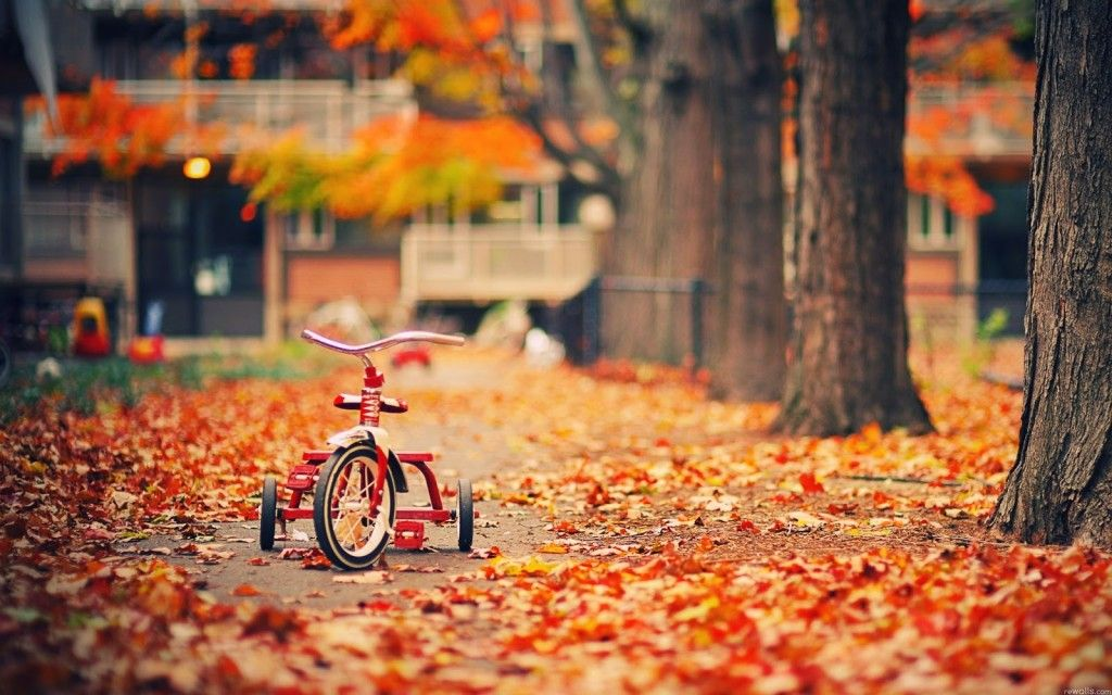 Autumn Leaves Falling Down Like Pieces Into Place With Images