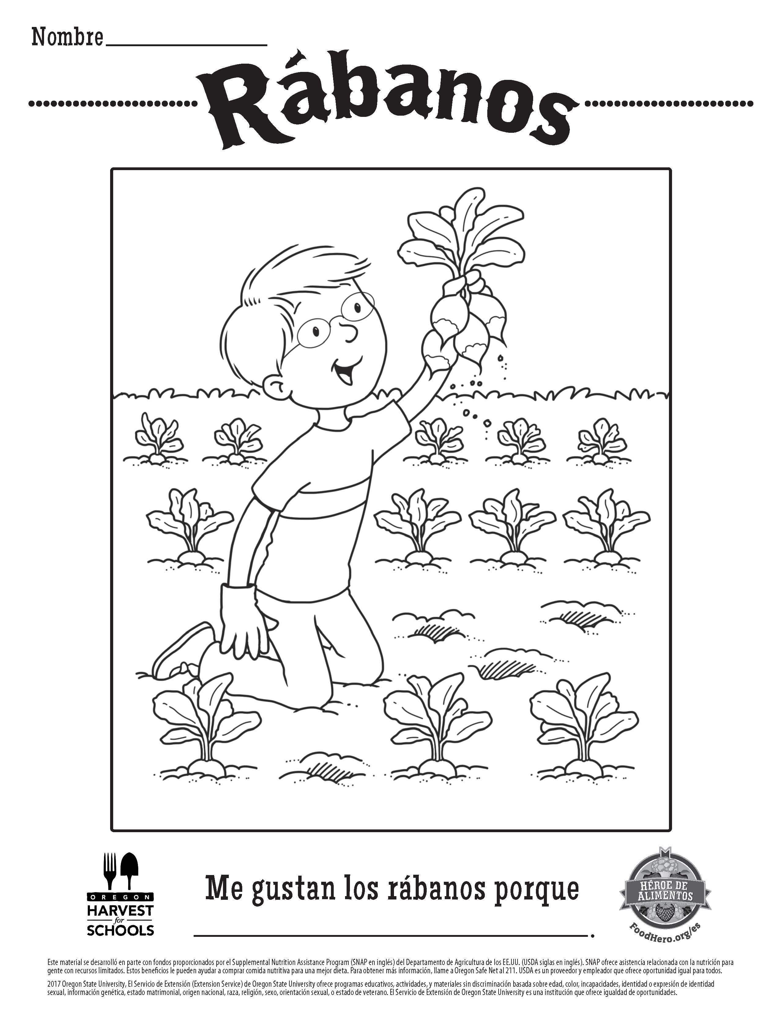 Radishes Free Printable Food Hero Coloring Sheet in Spanish
