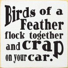 Birds Of A Feather Flock Together And Crap On Your Car Crack Me