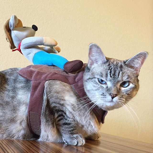Pin for Later: Cats Love Halloween Just as Much as Dogs Do