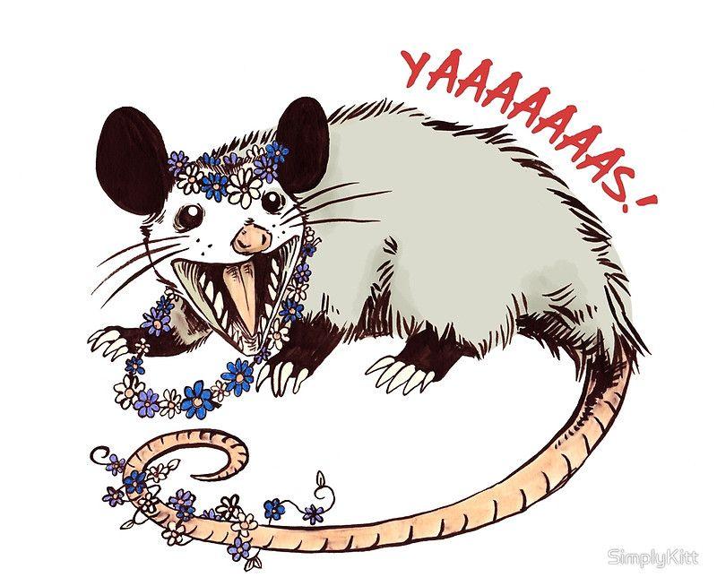 Daisy Chain Opossum Possum Yaaaas!' Canvas Print by SimplyKitt ...